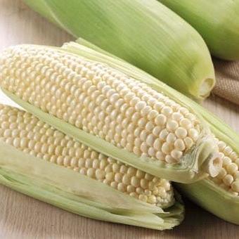 有機水果玉米