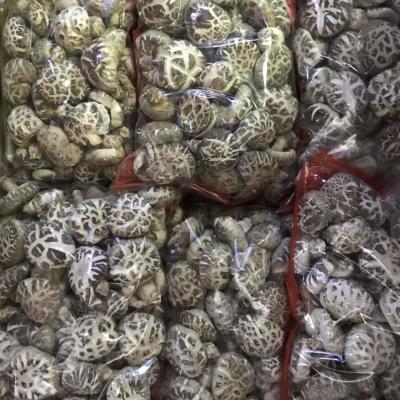 日本花菇1